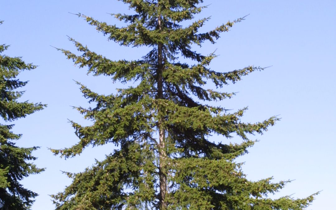 Poetry with Purpose – BC Forests – By Lawrence J.W. Cooper